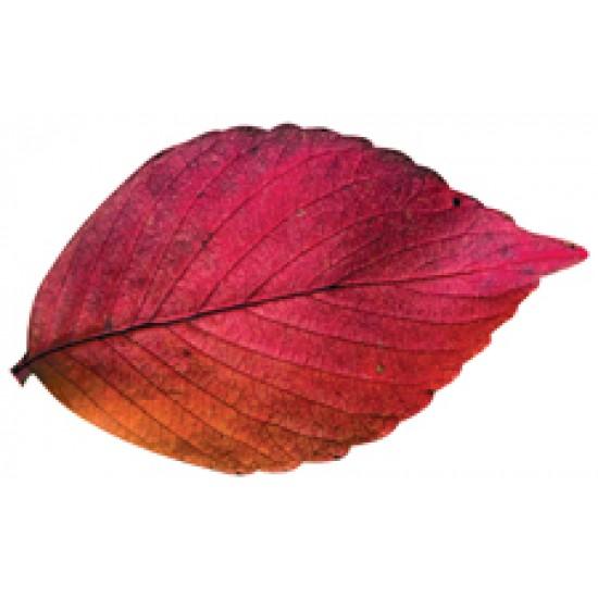 Осенняя тематика, Осенний набор,  (10 шт.), 2.20 р. за 1 шт.