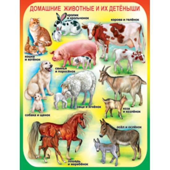 Плакаты, Домашние животные и их детеныши,  (10 шт.), 32 р. за 1 шт.