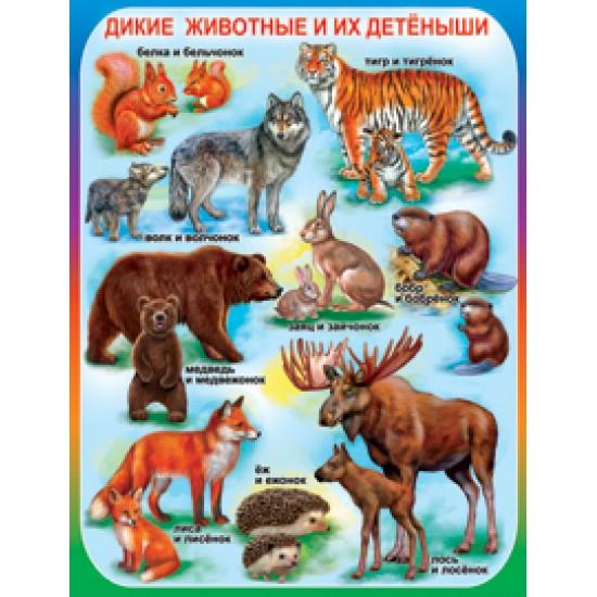 Плакаты, Дикие животные и их детеныши,  (10 шт.), 32 р. за 1 шт.