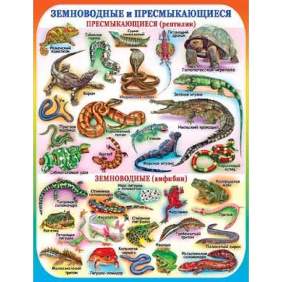 Плакаты, Земноводные и пресмыкающиеся,  (10 шт.), 33 р. за 1 шт.