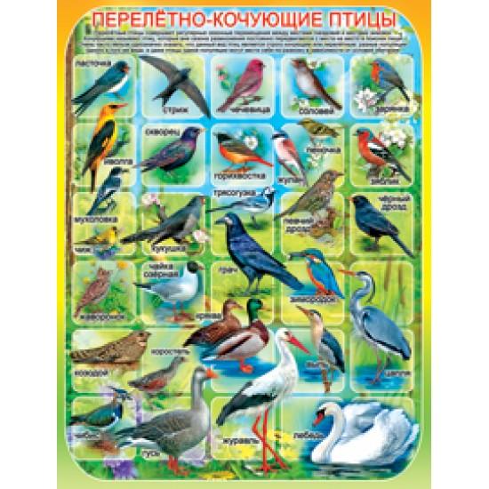 Плакаты, Перелетно-кочующие птицы,  (10 шт.), 33 р. за 1 шт.
