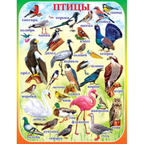 Плакаты, Птицы,  (10 шт.), 32 р. за 1 шт.