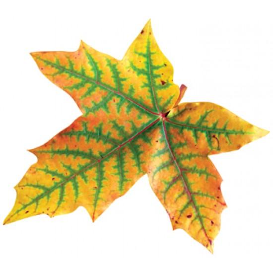 Осенняя тематика, Осенний набор (10 шт.),  (1 шт.), 46 р. за 1 шт.