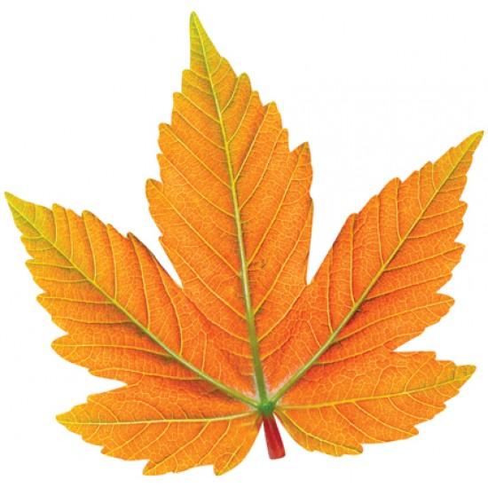 Осенняя тематика, Осенний набор (10 шт.),  (1 шт.), 65 р. за 1 шт.